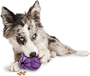 PetSafe Busy Buddy Barnacle Treat Dispensing Dog Toy