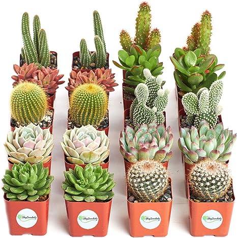 Amazon Com Shop Succulents Cactus Succulent Collection Of