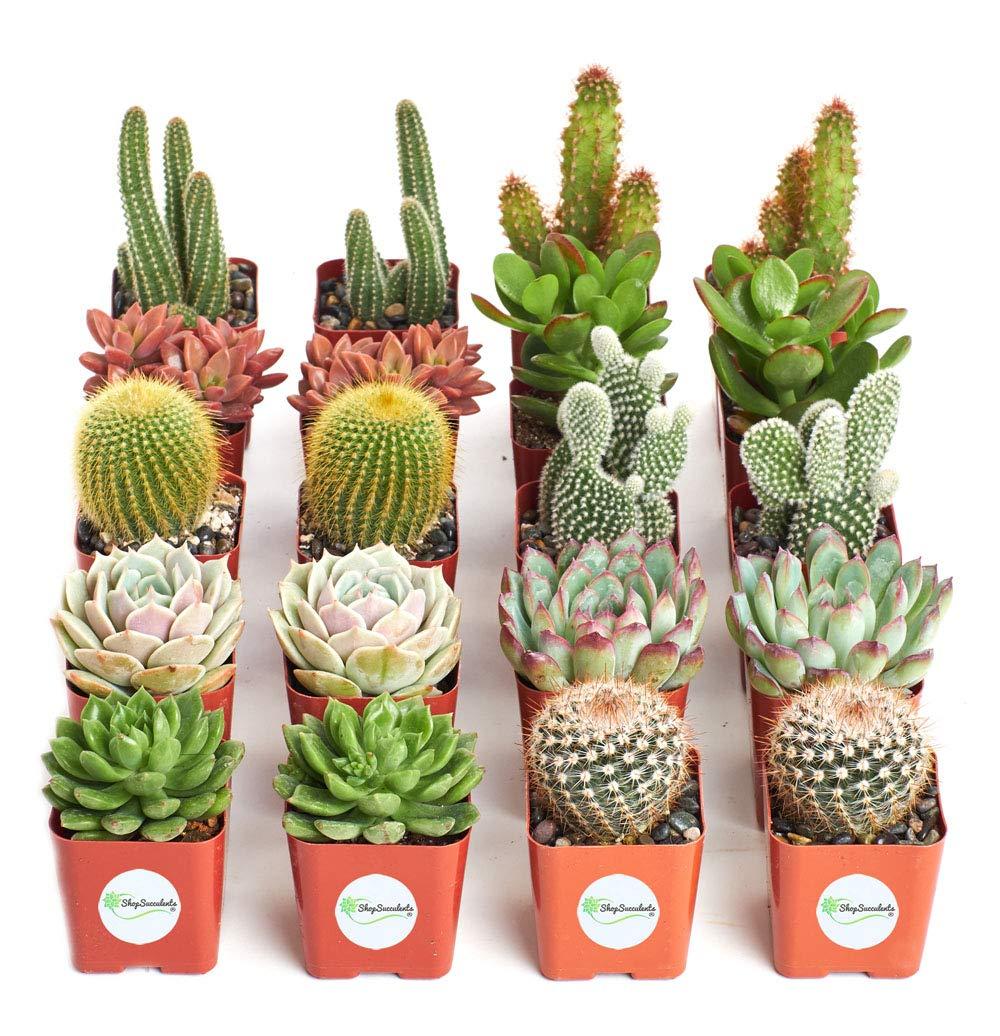 Cactus & Succulent Collection of Live Succulent Plants