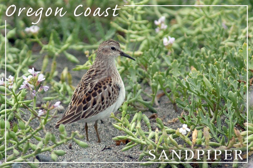 Oregon Coast – Sandpiper 36 x 54 Giclee Print LANT-49102-36x54 B017E9TFCS  36 x 54 Giclee Print