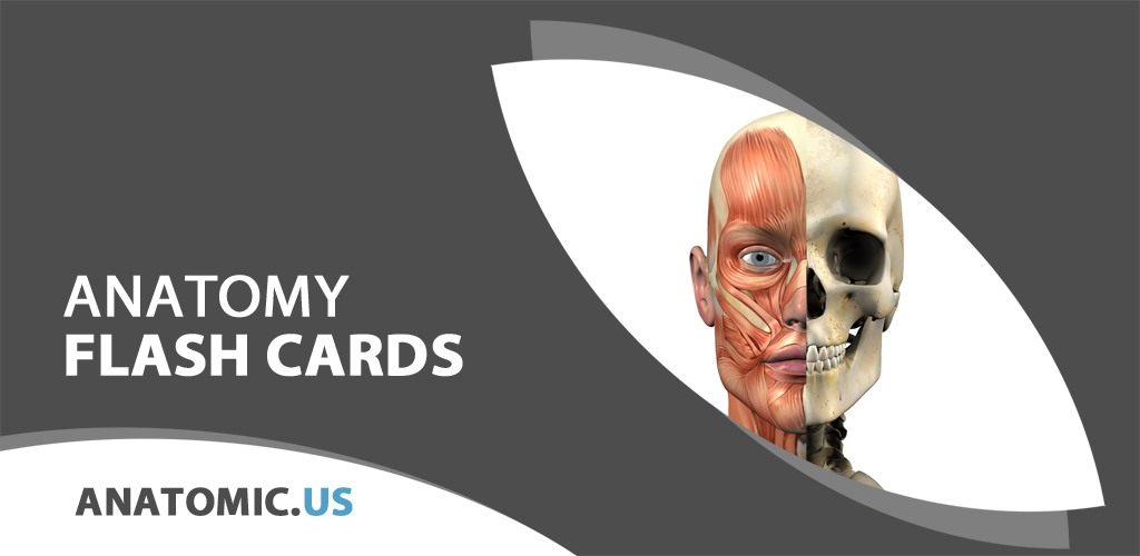 Amazon.com: ANATOMY FLASHCARDS: Appstore for Android