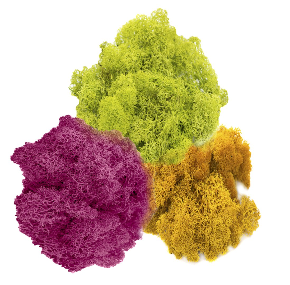 Reindeer Moss Preserved | Tri-Color Moss Assortment | Rose Pink, Lime Green, Orange Moss - 3oz | For Fairy Gardens, Terrariums, or any Craft or Floral Project | Nautical Crush Trading TM NCTS6709