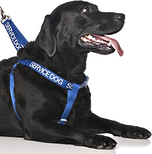 Dexil Limited-Service Dog Blue Color Coded Alert Warning L XL Non-Pull Dog Harness