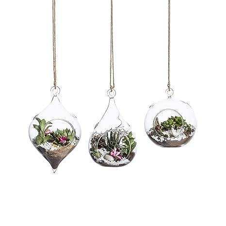 Amazon Com Whole Housewares Glass Terrarium Set Of 3 In Large Size