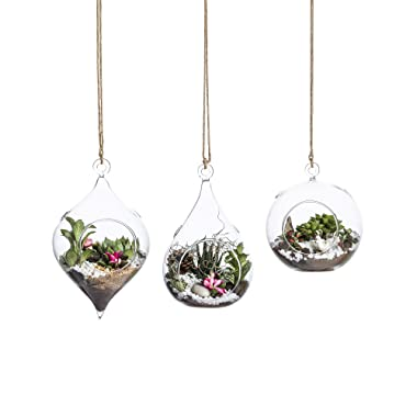 Whole Housewares Glass Terrarium Set of 3 in Large Size- Succulent/Moss/Air Plant Container - 3 Pack in Different Shape