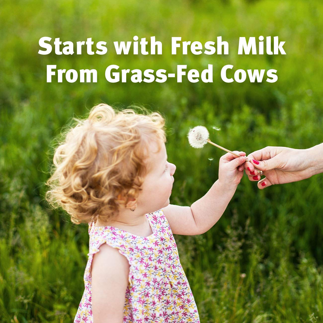Pure Bliss by Similac Toddler Drink with Probiotics, Starts with Fresh Milk from Grass-Fed Cows, Non-GMO Toddler Formula, 31.8 ounces by Similac (Image #4)