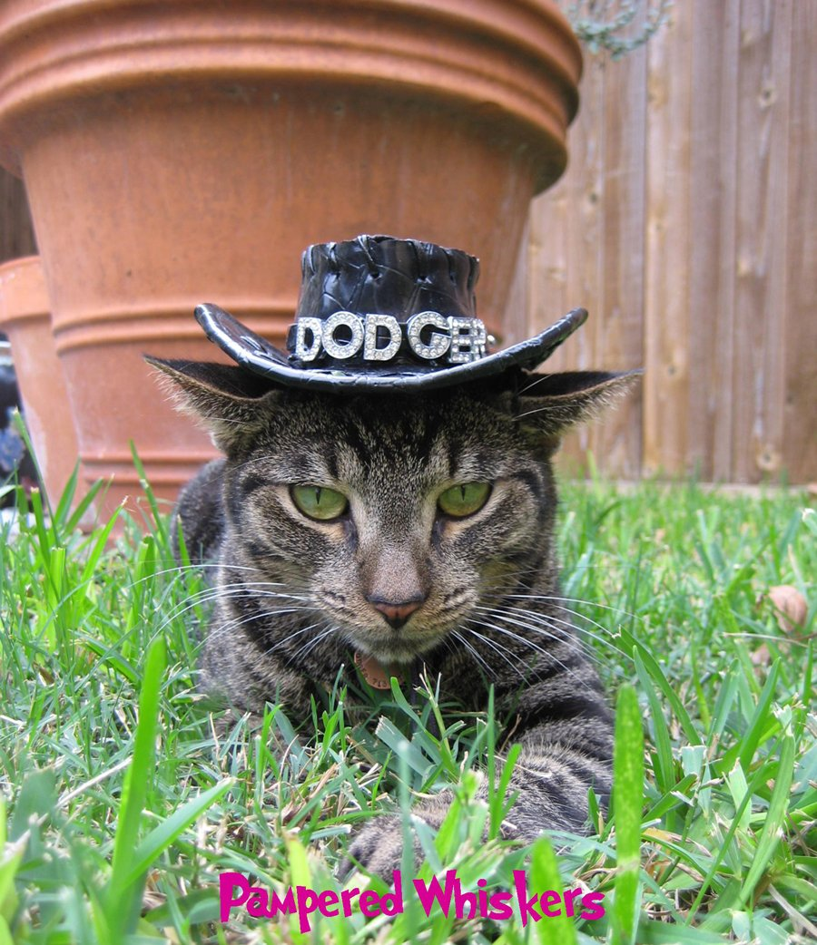 Amazon Pampered Whiskers Black Cowboy Hat For Dogs And Cats