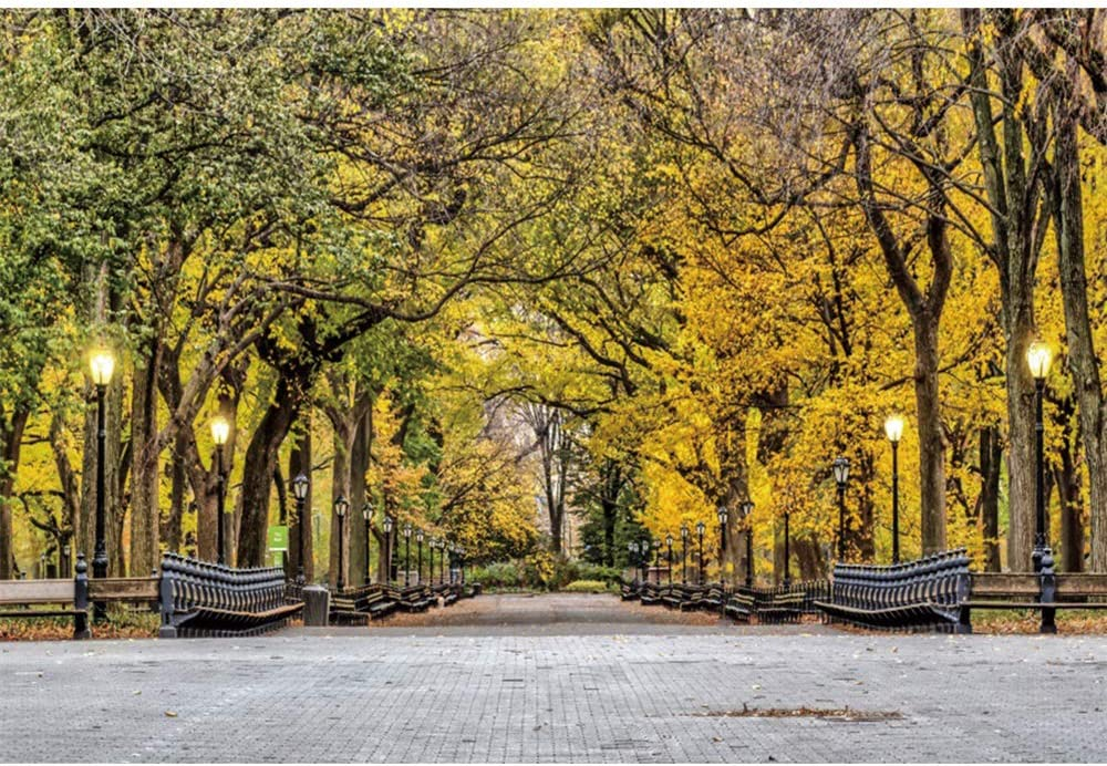 YongFoto 10x9ft Autumn Nature Deciduous Foliage Backdrop Green and Yellow Trees Photography Background Autumn Park Landscape Long Wooden Beach Light Picnic Hiking Holiday Vacation Photo Studio Props