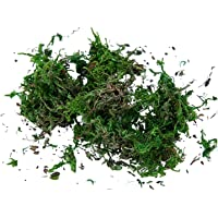 Fenteer Real Moss, Green Lichen, Green Plants for Home Garden Patio Decoration, Reindeer Moss for Lining Plant Flower…