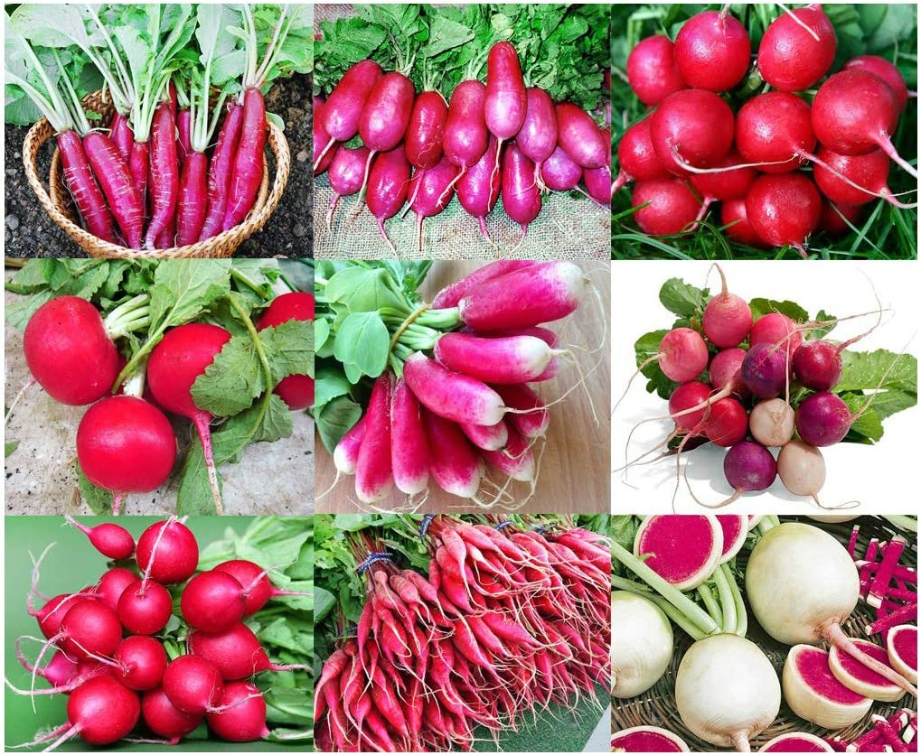 Please Read! This is A Mix!!! 100+ Radish Mix 9 Varieties Seeds, Heirloom Non-GMO, Colorful, Pink, Red, White, Sweet and Mild, from USA