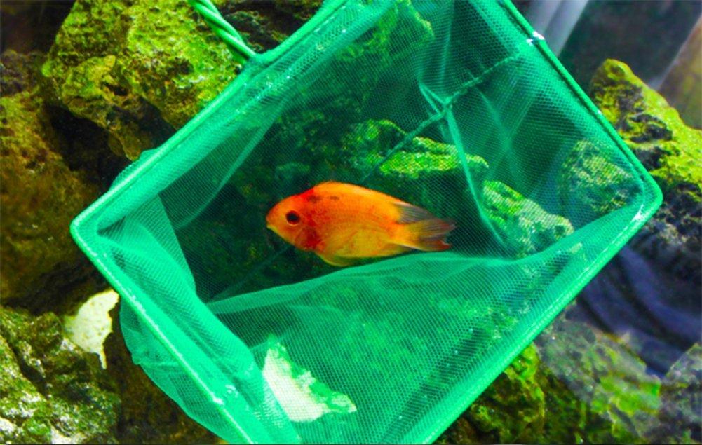 Vi.yo Red de malla para acuario (metal, mango largo, para peceras ...