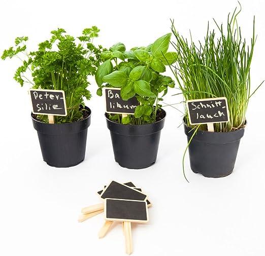 esto24® 10 Set – Etiquetas para plantas Planta estaca de madera ...