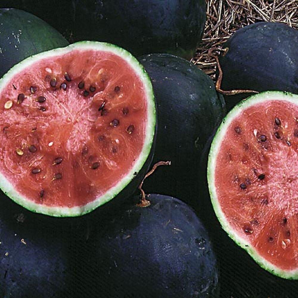 Small Shining Light Watermelon Russian Heirloom Non-GMO Melon Fruit Garden Seeds 15 by rollmisty