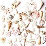 Super Z Outlet Mixed Ocean Beach Fairy Garden Assorted Seashells Marine Life for Decorations, Arts & Crafts, Party Favors Col