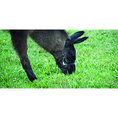 Nature's Seed PB-SWTA-2.5-A Southwest Transitional Alpaca/Llama Pasture Blend, 2.5 Acre : Garden & Outdoor