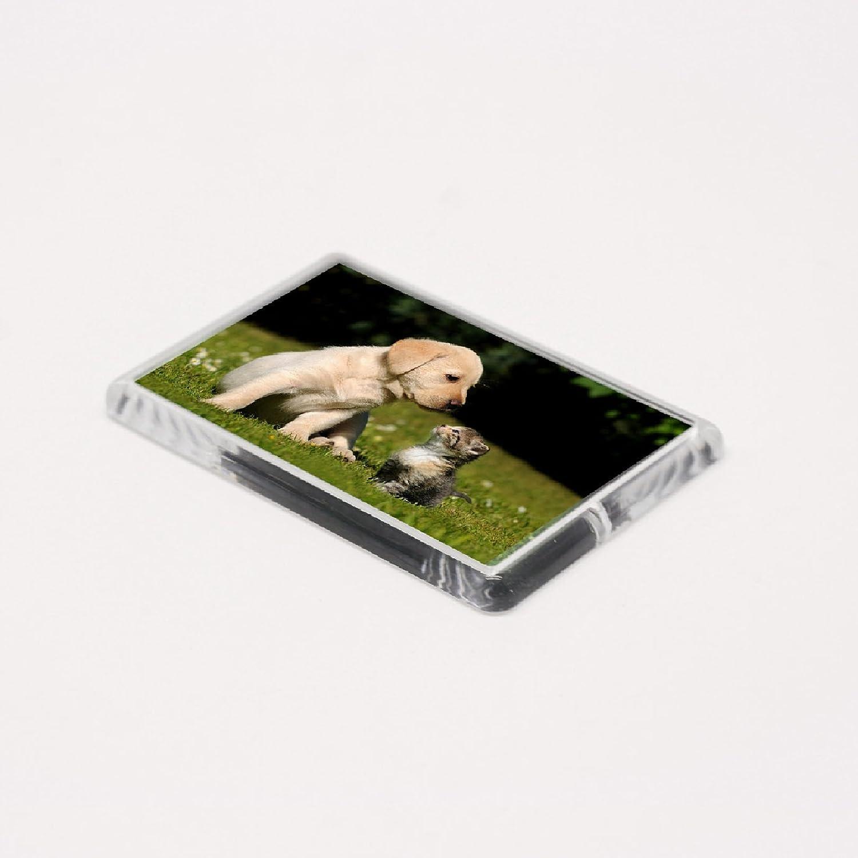 Amazon.de: 5 große blanko Foto Kühlschrank Magnet 70 x 45 mm 10 Stück