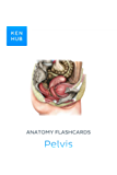 Anatomy flashcards: Pelvis: Learn all muscles, ligaments, arteries, veins, organs and nerves on the go (Kenhub…
