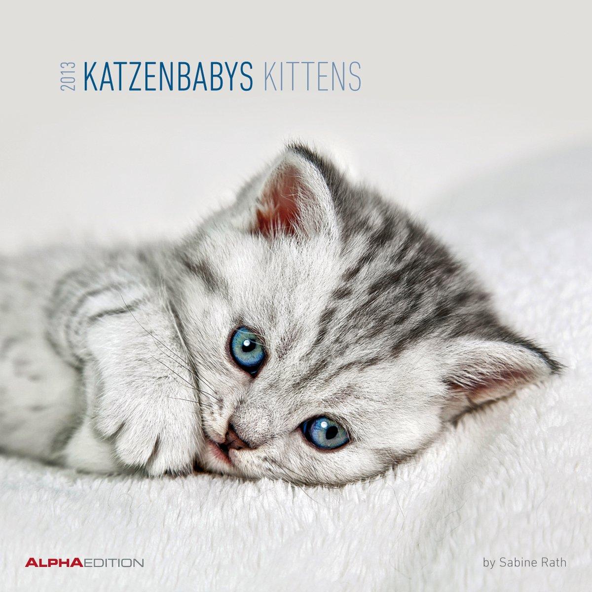 Katzenbabys 2013, Broschürenkalender - Kittens 2013