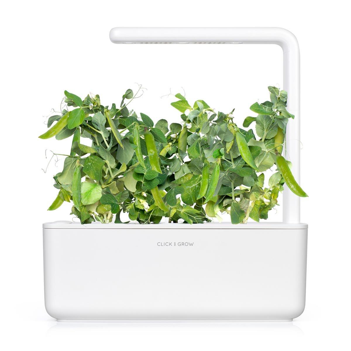 Recarga Triple de guisante enano para Smart Garden - Click and ...
