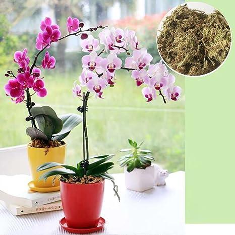Sustrato de musgo esfagno deshidratado para cultivo de orquídeas Phalaenopsis, cultivo sin tierra, secado
