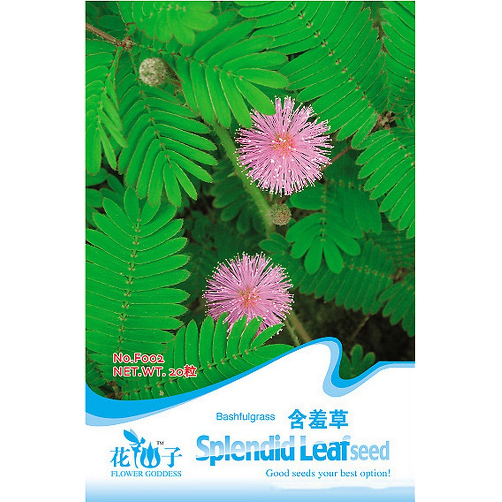 amazing-trading(TM) 1 Pack 30 Seeds Foliage Mimosa Pudica seeds