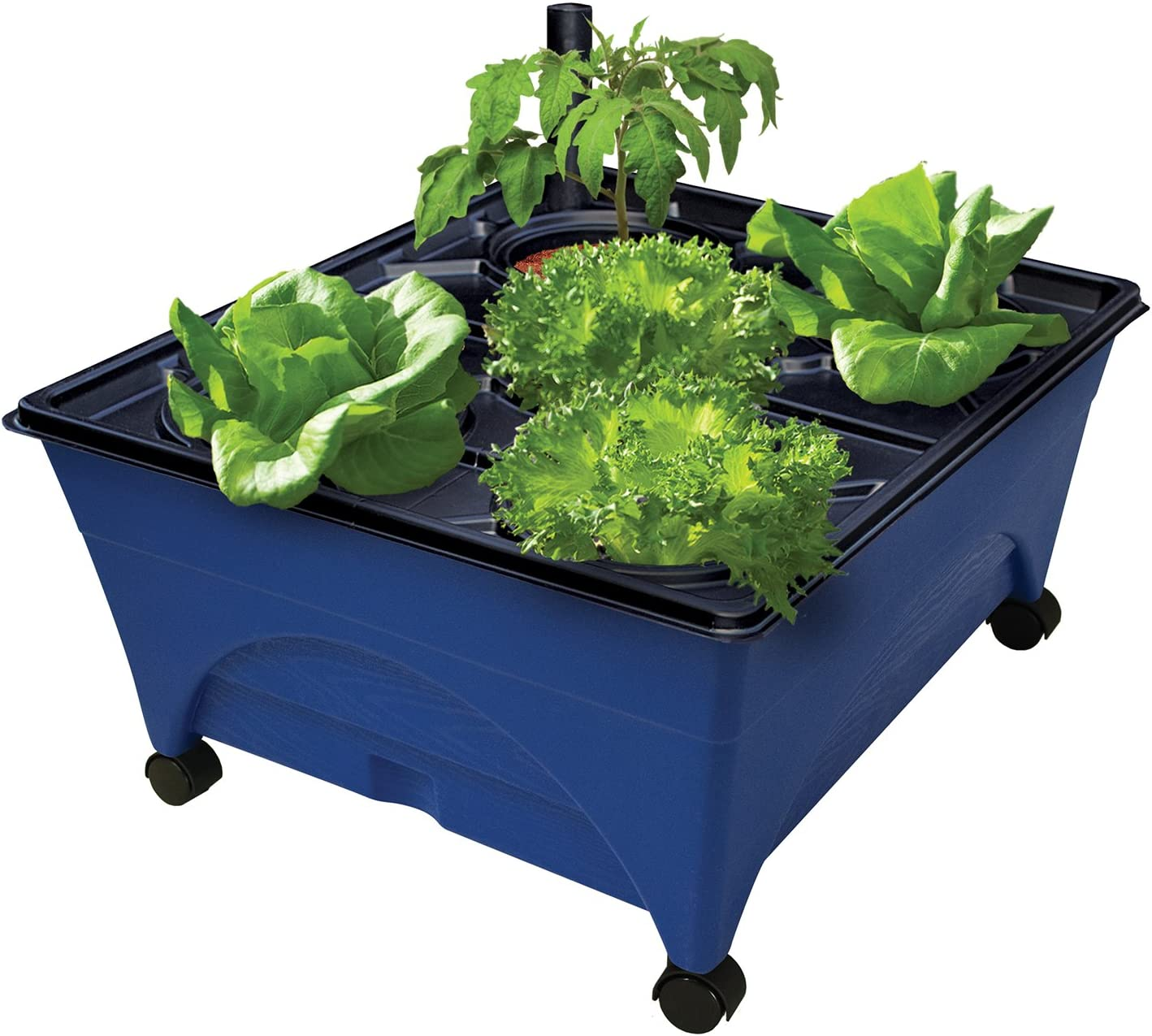 "Emsco Group 5 Hydropickers Compact 5"" x 5"" Footprint – Mobility  Provided by Casters Non-Electric Hydroponics Grow Box, Blue"