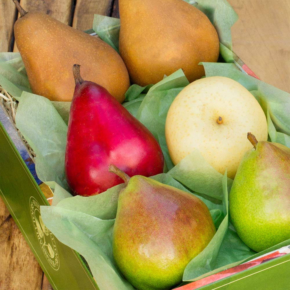 The Fruit Company Pear Medley Gift Box - 4 lbs An Assortment of 6 Pieces (3 varieties) Premium Fresh Pacific Northwest Pears Hand-Packed in a Reusable Watercolor Box Designed by Local Oregon Artist