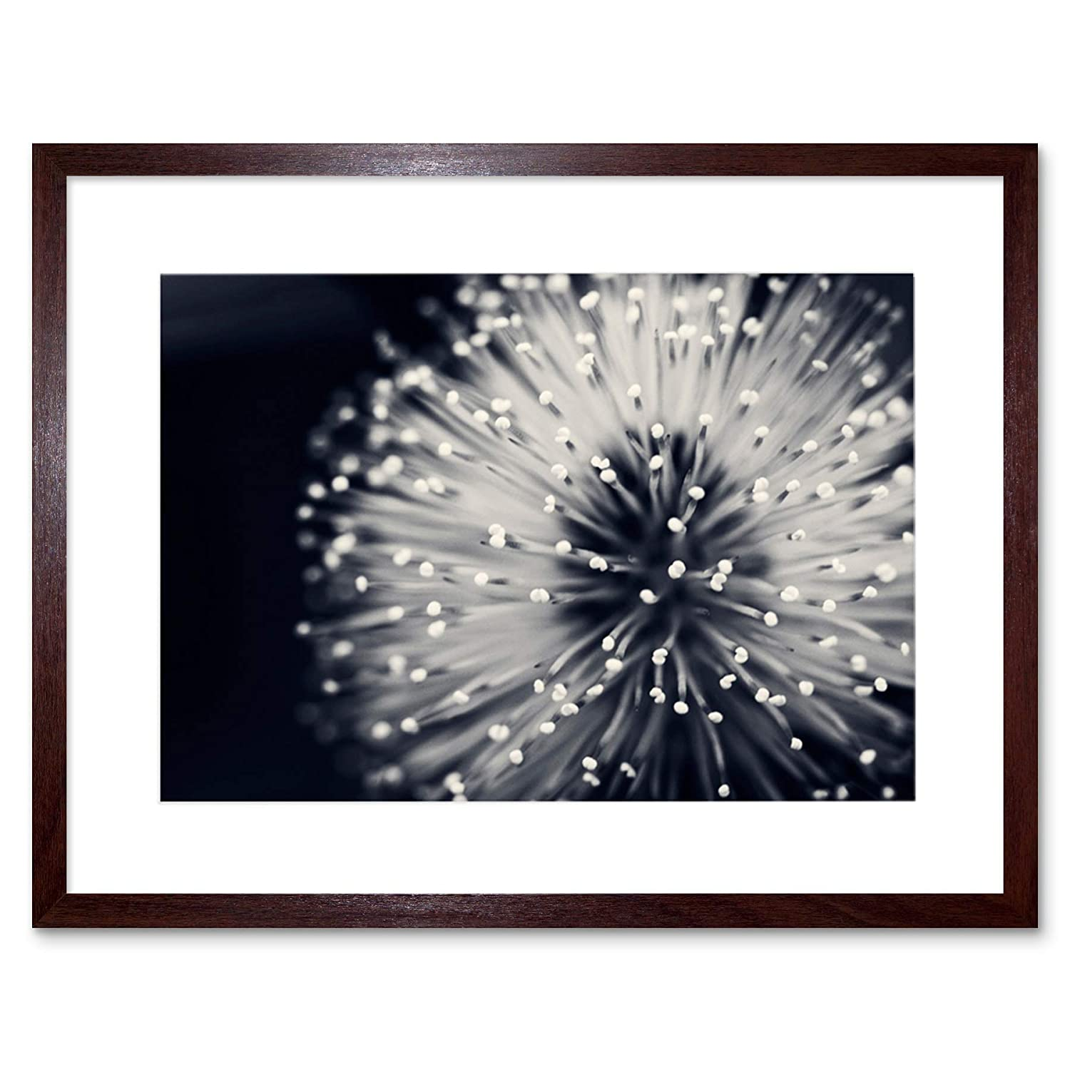 The art stop photo nature plant flower black white beautiful home framed print f12x4247
