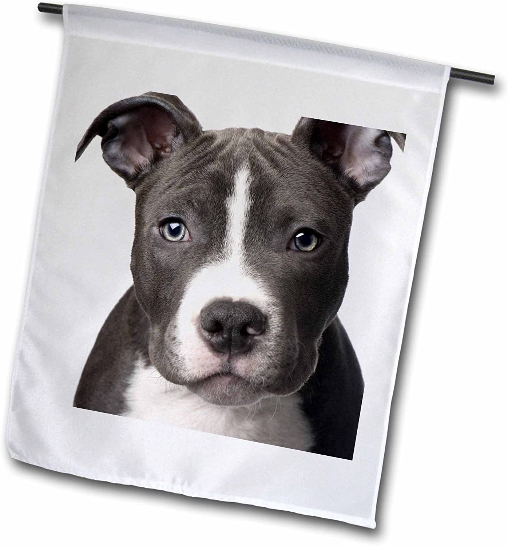 3dRose fl_4240_1 American Pit Bull Terrier Puppy Garden Flag, 12 by 18-Inch