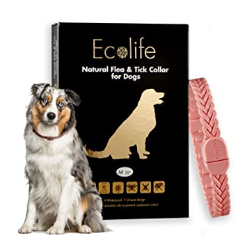 Amazon.com: Ecolife - Collar antipulgas y garrapatas natural ...