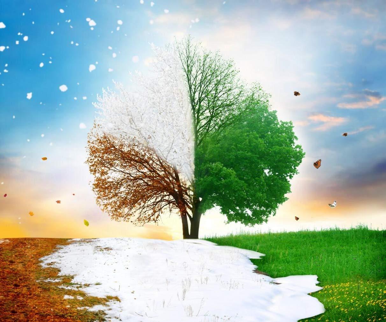 自然の風景 四季 ハートツリー 写真 背景 秋冬 春 夏 マジック シーズン 写真 背景 スタジオ撮影用 10x8フィート   B07M9PBR3Z