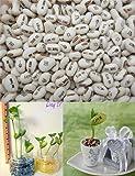 20 pcs Semence Beans Magique Haricot Message Plantes Graine Blanc Cadeau