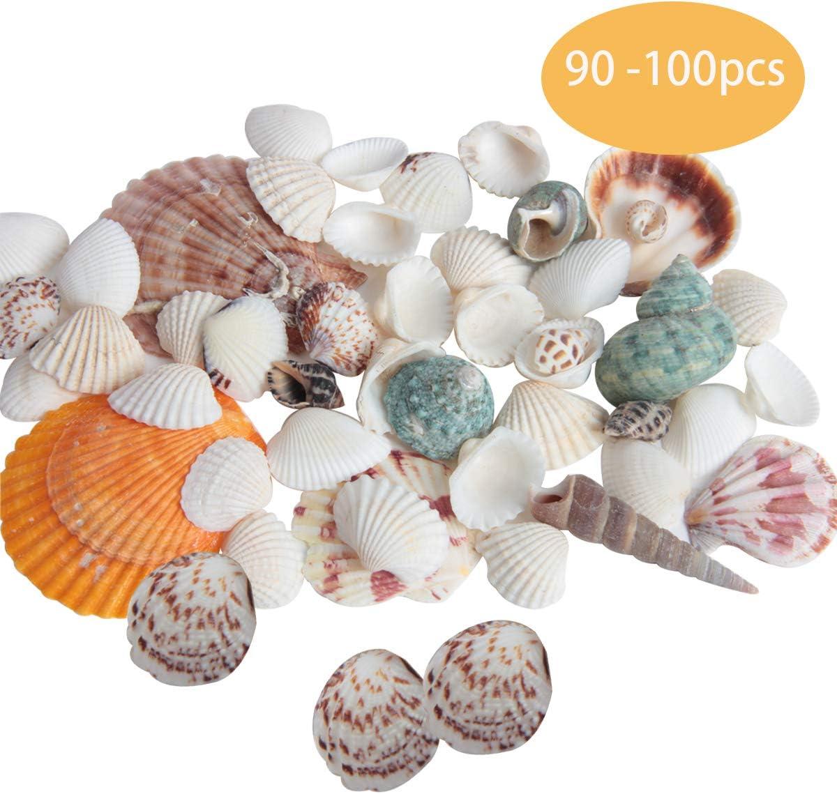 Hapy Shop Sea Shells Mixed Beach Seashells Starfish, Various Sizes Natural Seashells for Beach Theme Party,Fish Tank, Home Decorations, Wedding Decorations DIY Crafts 90+ pcs
