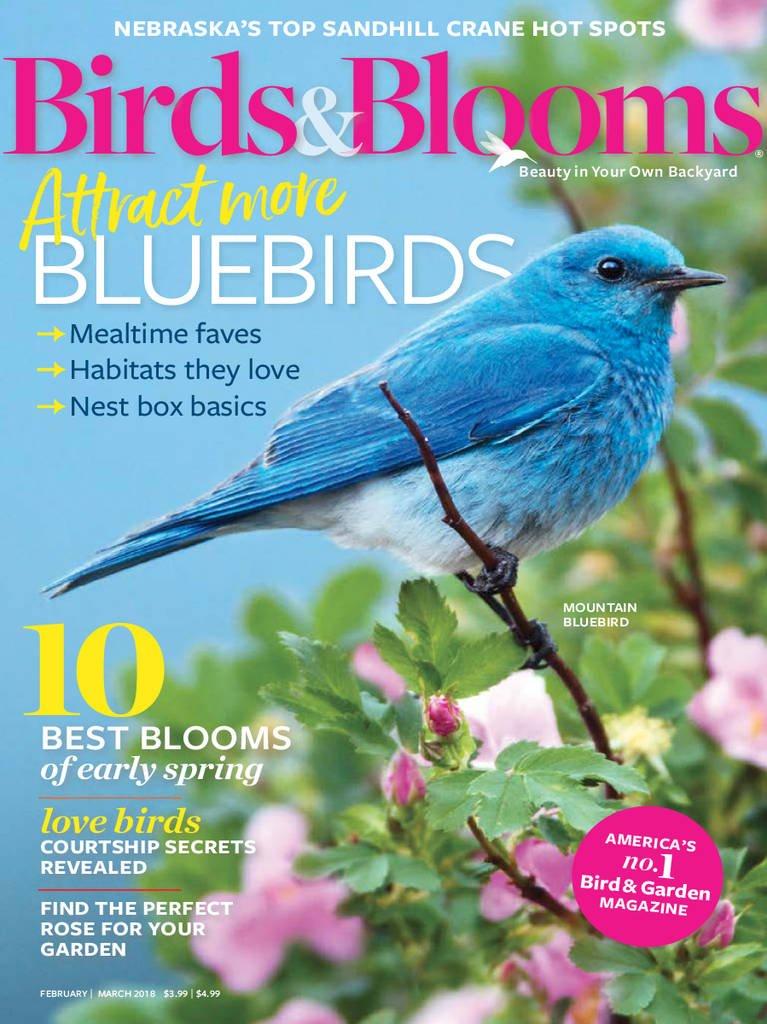 birds \u0026 blooms amazon com magazines