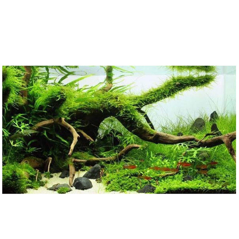 FairytaleMM Fish Tank Aquarium Paisajismo Decoraci/ón Driftwood Ornament Stump Cuckoo Root Tree Trunk Decor Fish Tank Decoration-Wood Color 20-25cm