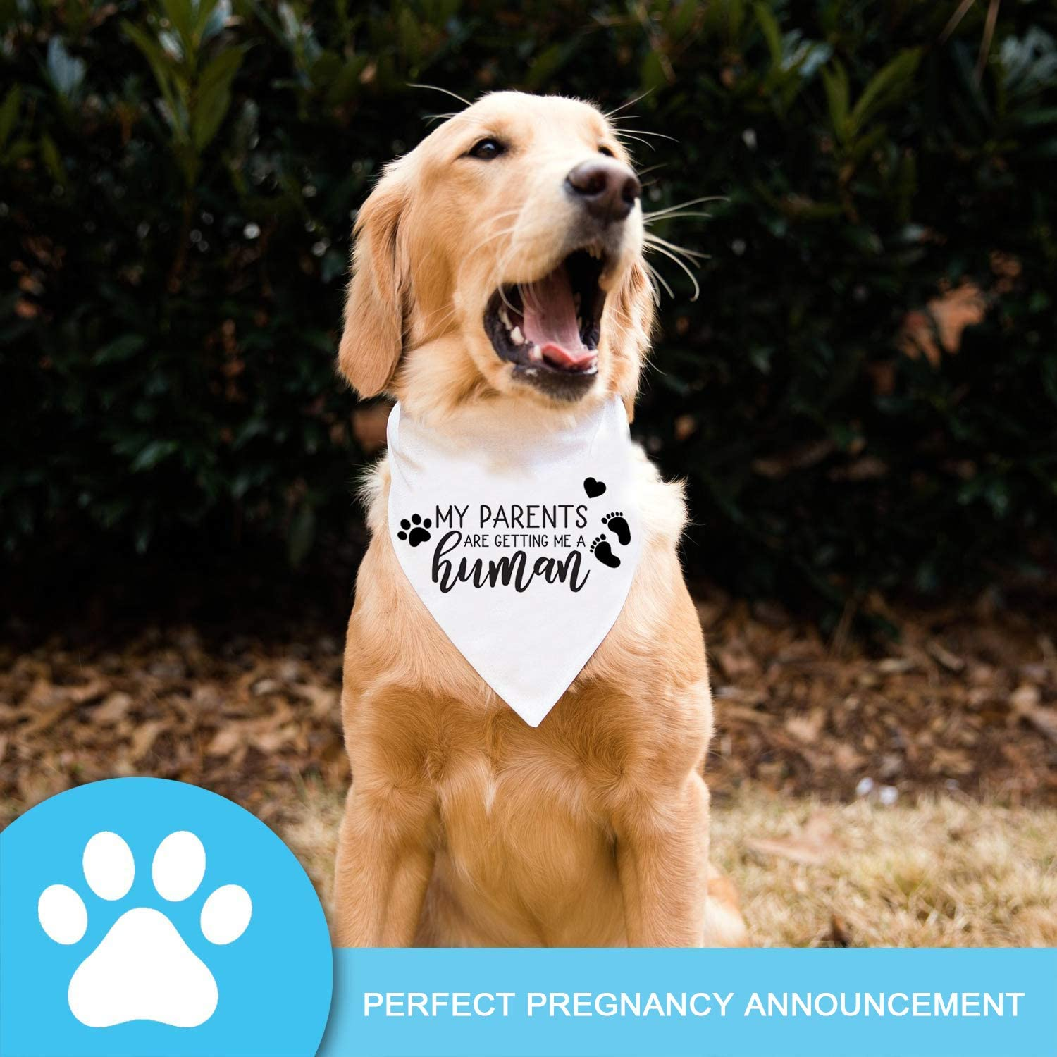 Hey Dad Mom/'s Pregnant Dog Bandana for Pregnancy Announcements or Photos