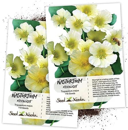 Tropaeolum majus 50 seeds seeds Nasturtium