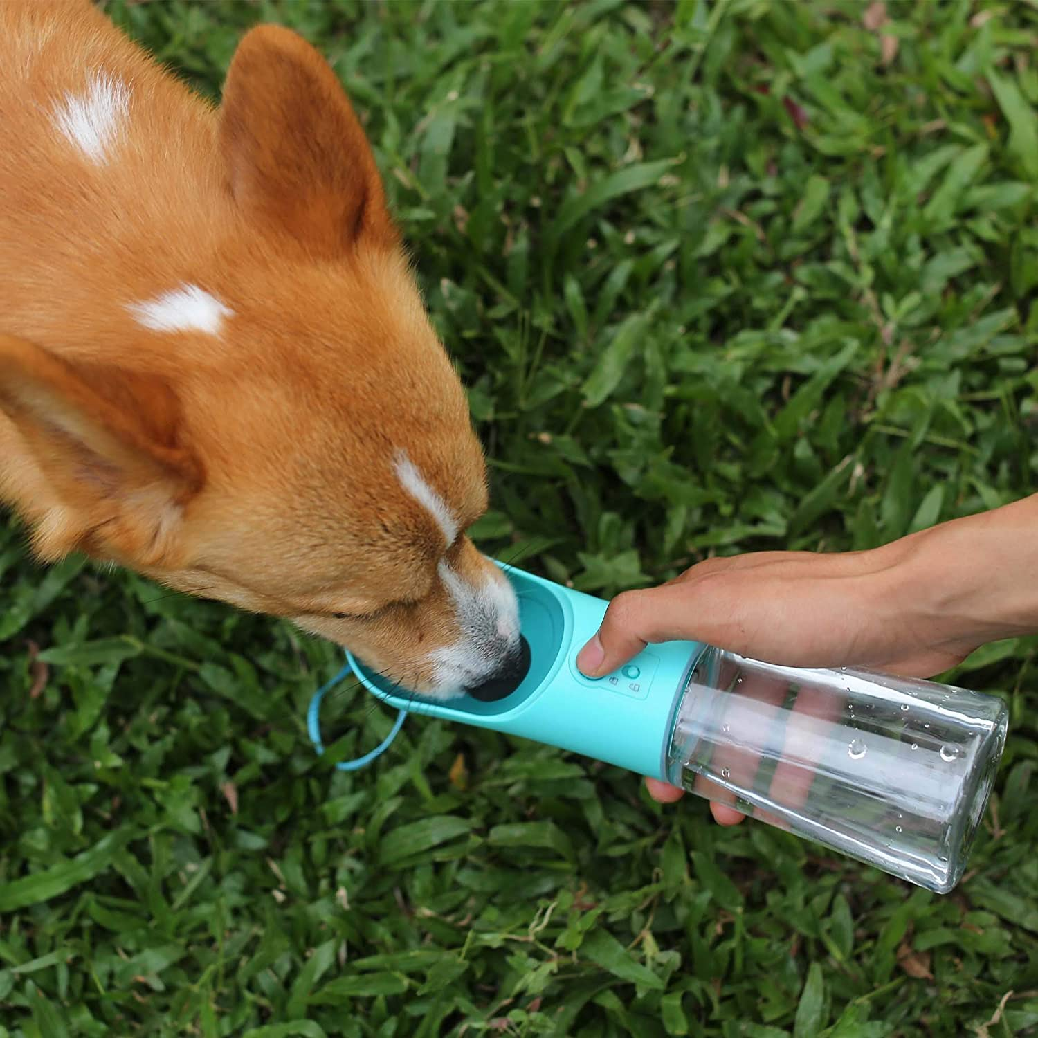 Daily Deals On Pet Essentials Every Animal Lover Should Have - Dog Water Bottle