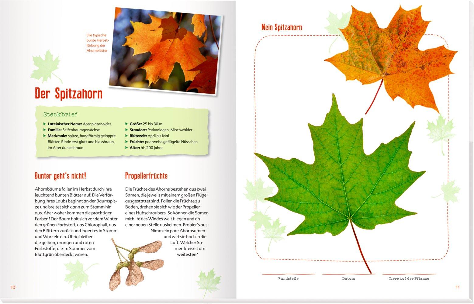 Herbarium Blätter blätter blüten und gräser stefanie zysk amazon com au books