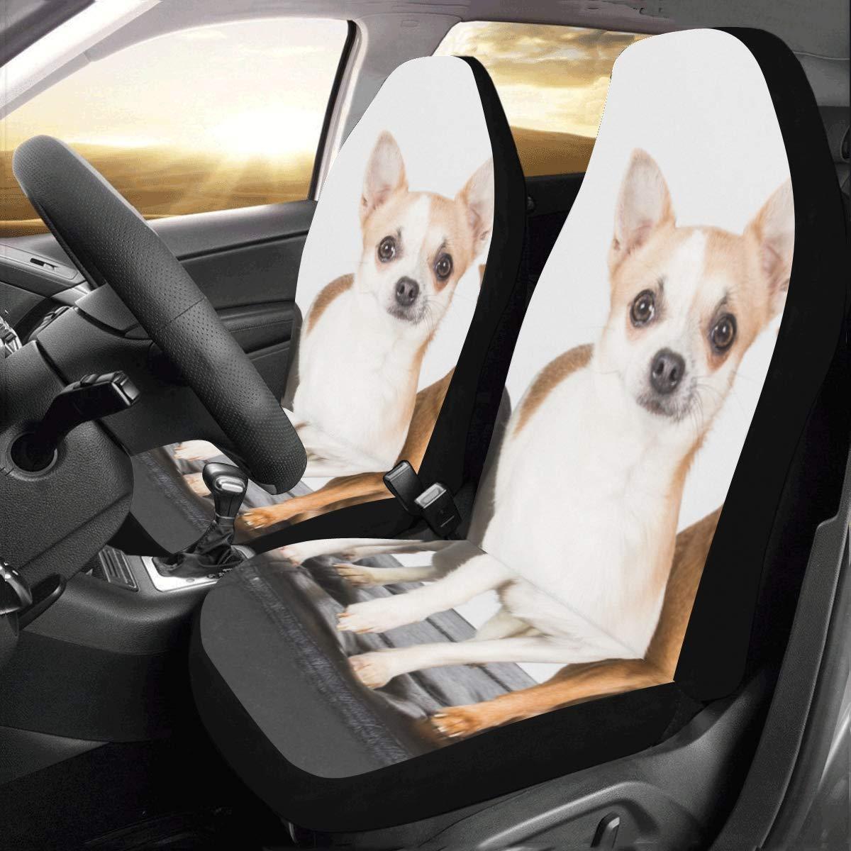 Amazon.com: Cute Small Chihuahua Puppy Dog