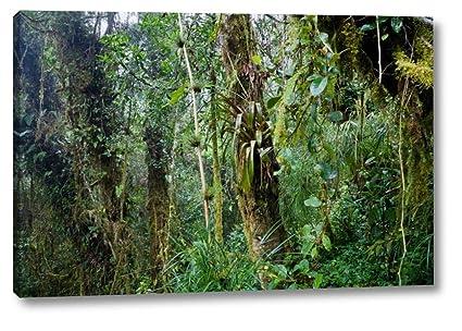 Art print POSTER CANVAS Costa Rican Rainforest