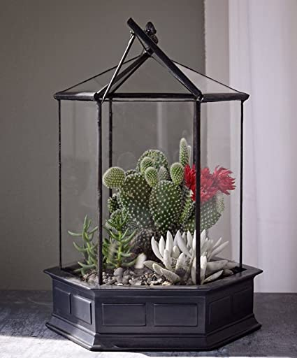 H Potter Six Sided Glass Terrarium Container Succulent Planter
