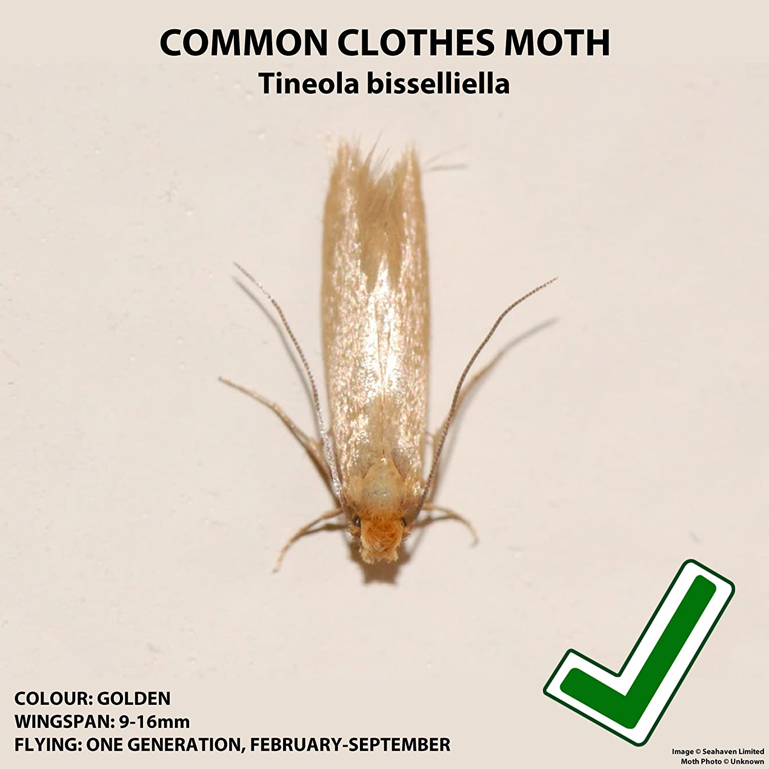 Pack Of 10 Entopest Common Clothes Moth Pheromone Replacement Refill