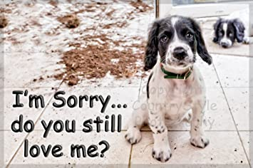 Sorry puppy dog funny cute fridge magnet im sorry you still sorry puppy dog funny cute fridge magnet im sorry voltagebd Images