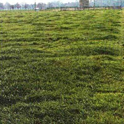 Marshall Ryegrass Seed : Garden & Outdoor