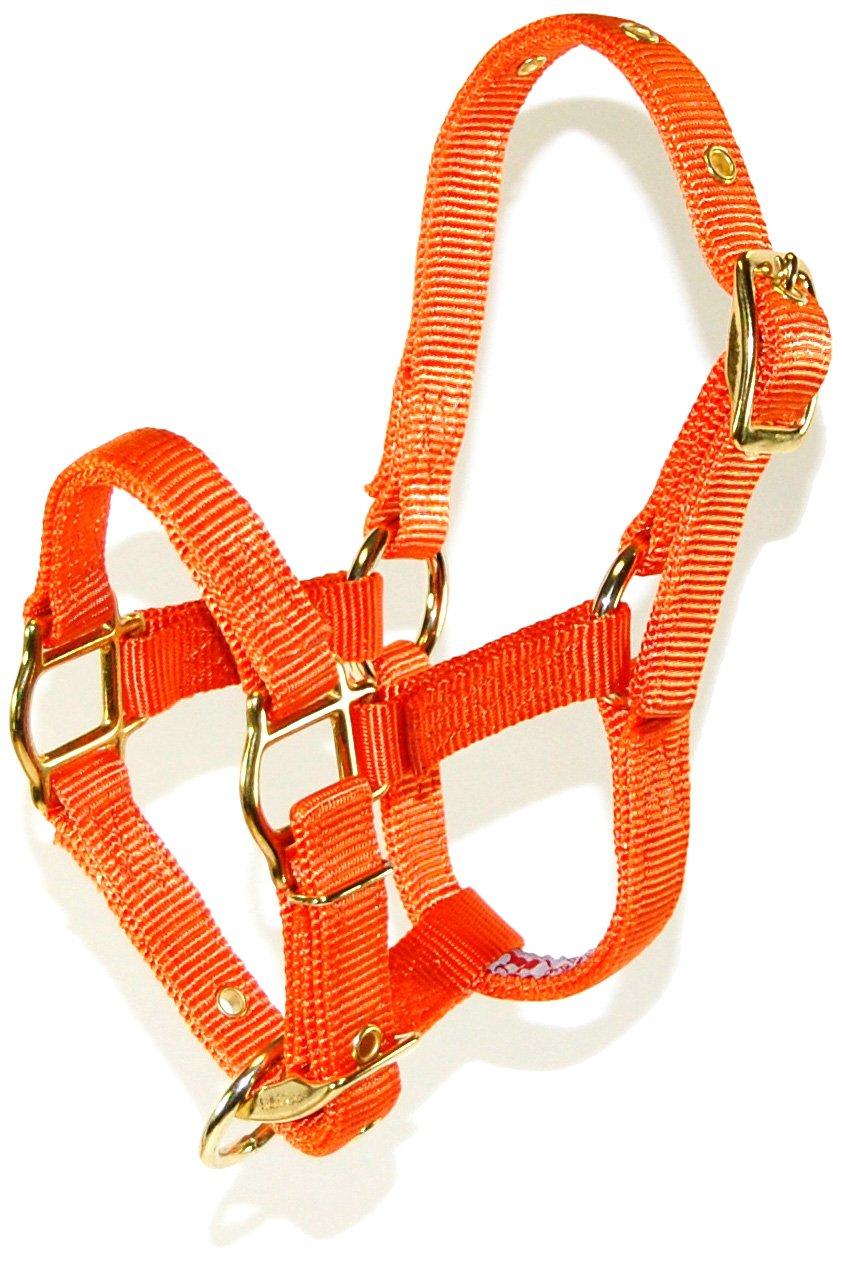 Mango orange Yearling Mango orange Yearling Hamilton Adjustable Miniature Nylon Horse Halter