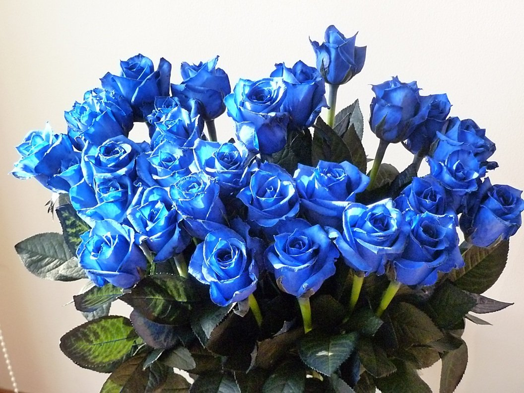 fleurcoco【フラワー ギフト】青バラ 花束20本【 結婚祝い 結婚記念日 誕生日プレゼント 彼女 女性人気】 B008LPC8SS