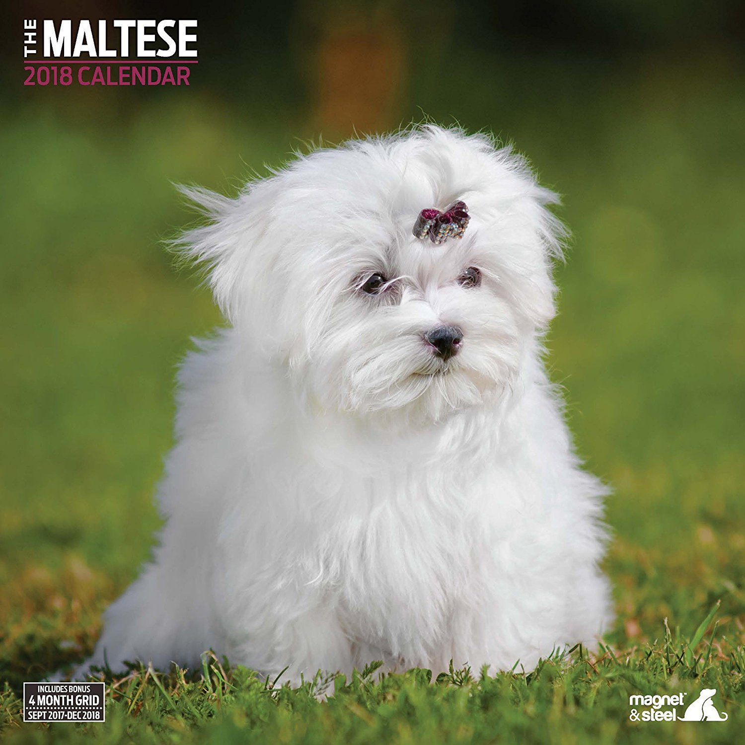 Amazon Maltese 2018 Traditional Wall Calendar Office Products