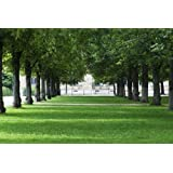 Shaded woodland shady Area Grass & Lawn Seed 20 Sq Me 800 grams. MeadowMania. Covers up to 20 square metres