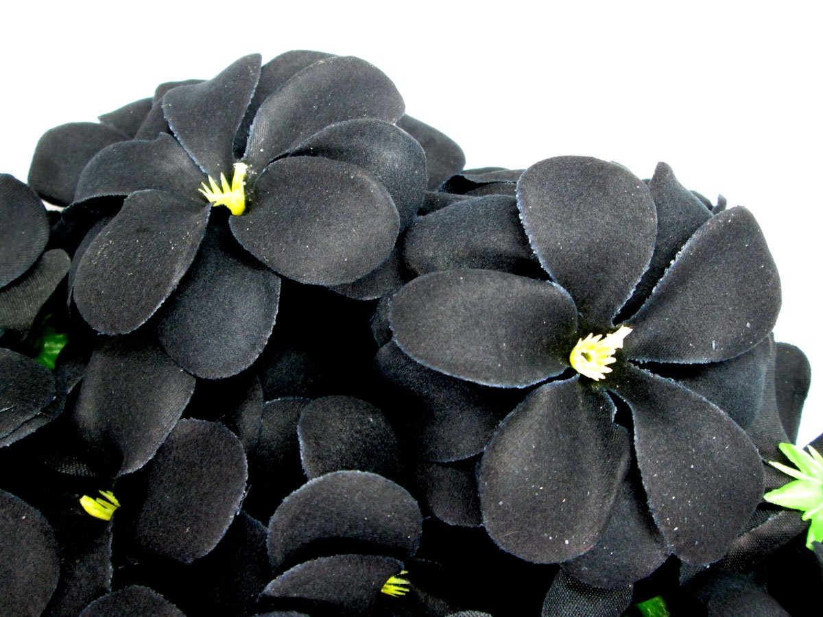 Wholesale hawaiian flowers images flower wallpaper hd amazon 100 black hawaiian plumeria frangipani silk flower amazon 100 black hawaiian plumeria frangipani silk flower izmirmasajfo
